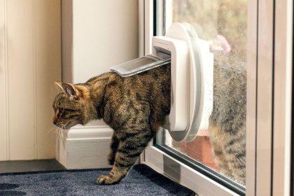 Make Life Easier with a Cat Door