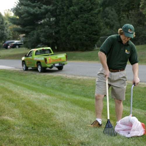 We Offer the Best Local Feces Cleanup Service